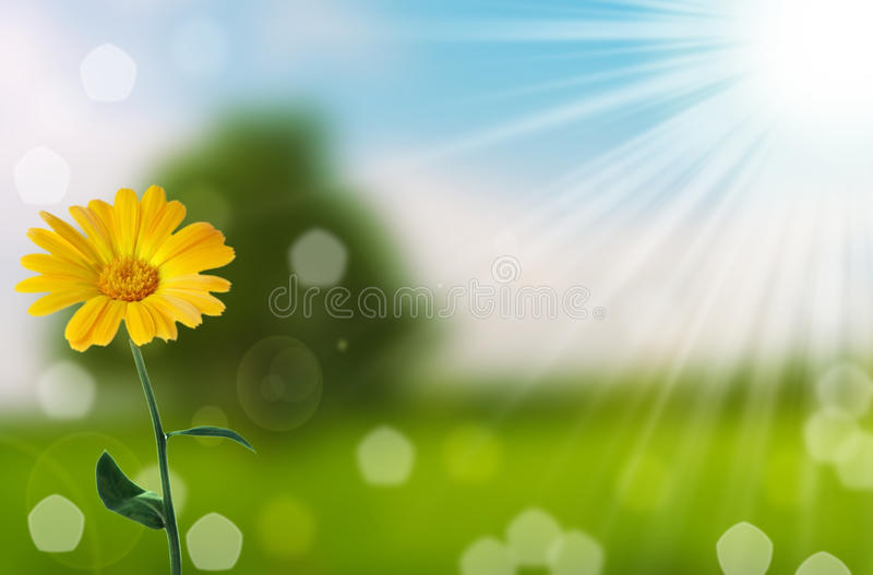 Flower and nature spring bokeh background royalty free stock photography