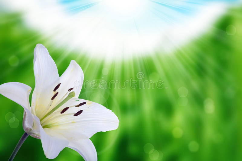 Flower and nature spring bokeh background royalty free stock photos
