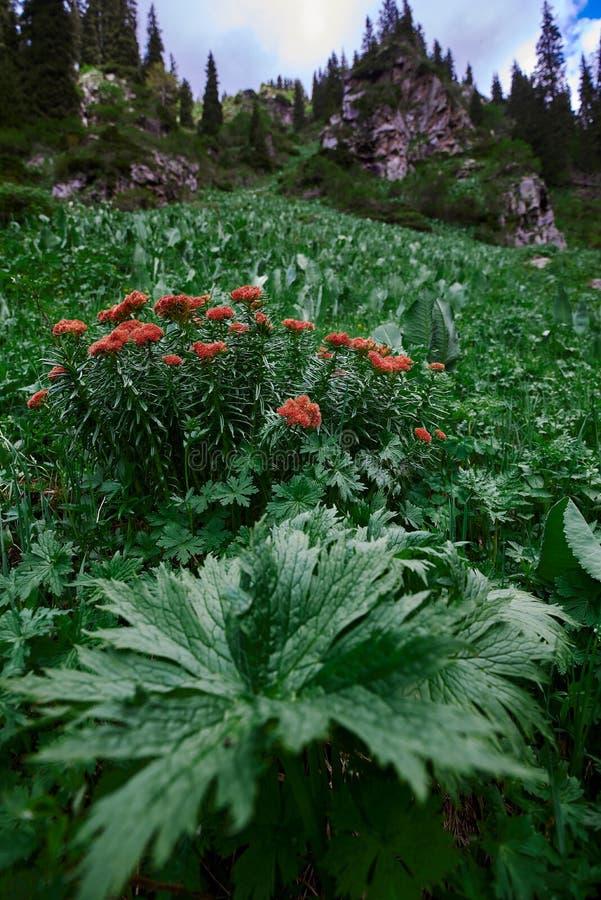 Flower near Waterfall butakovsky. Green stock image