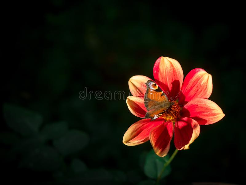 Flower, Nectar, Flora, Insect royalty free stock photos