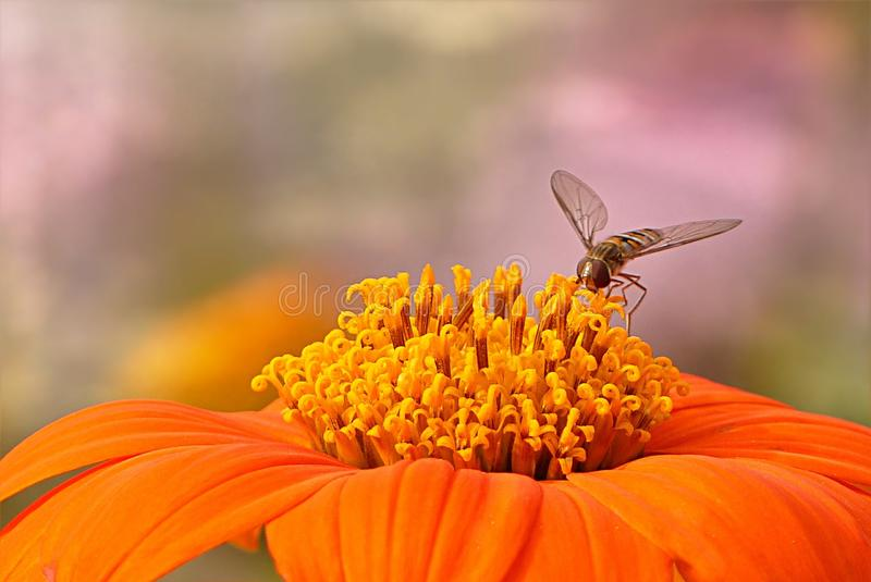 Flower, Nectar, Pollen, Macro Photography Free Public Domain Cc0 Image