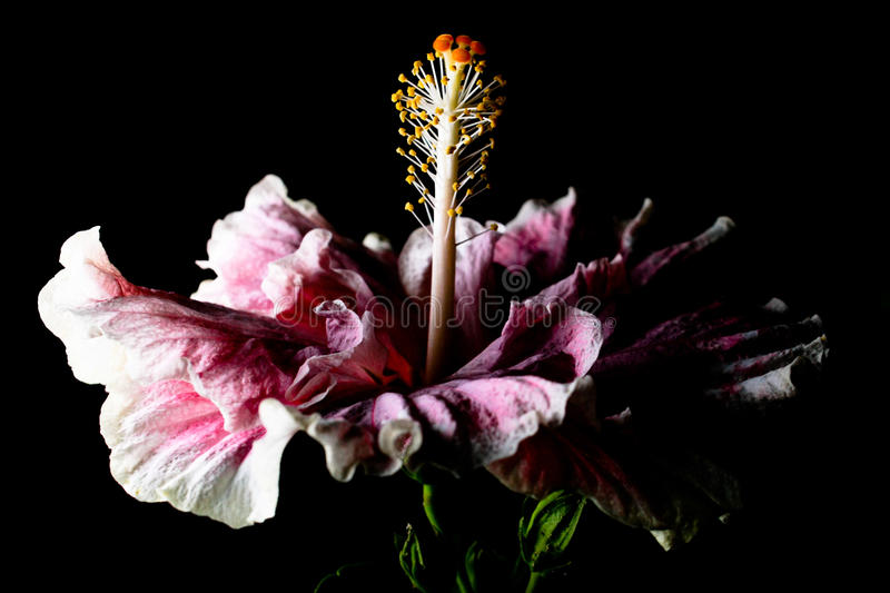 Flower in the night royalty free stock images