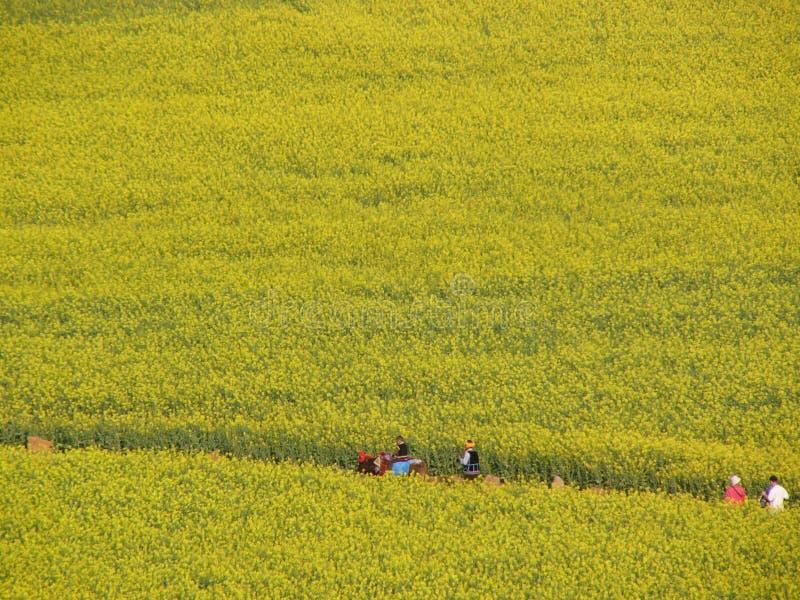 Download Flower Ocean Stock Image - Image: 5880181