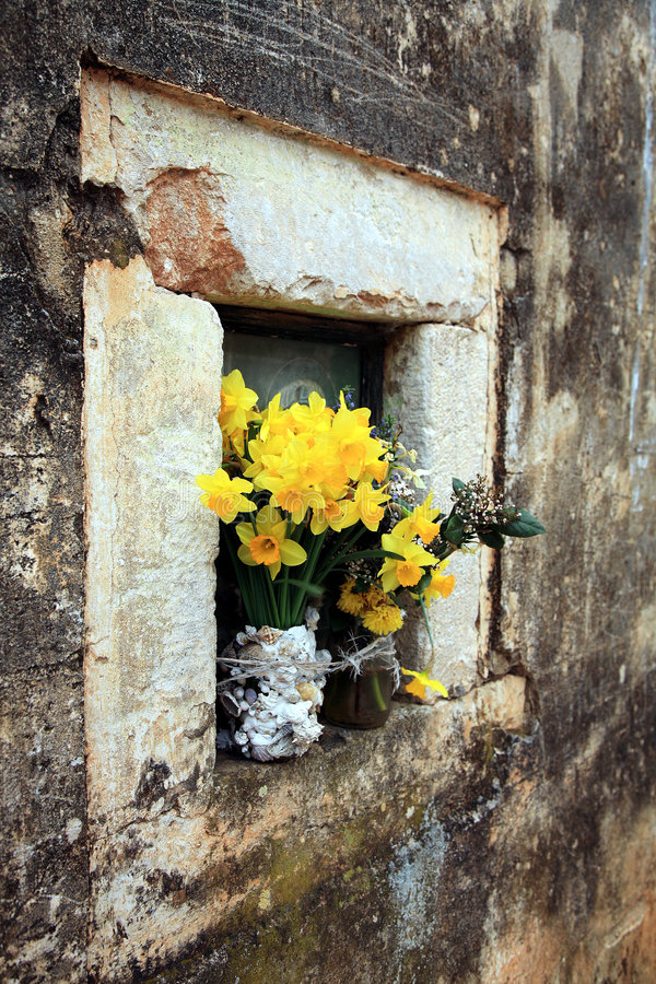 Flower in old church - Ston. Yellow jonquils in vase - Ston royalty free stock image