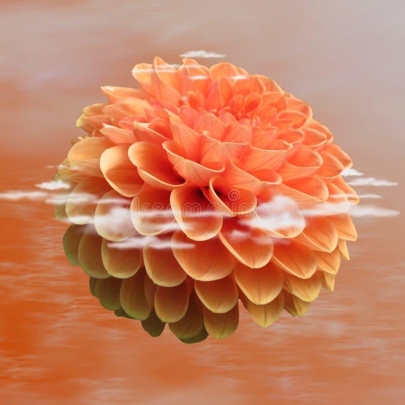 Flower, Orange, Dahlia, Petal stock photos