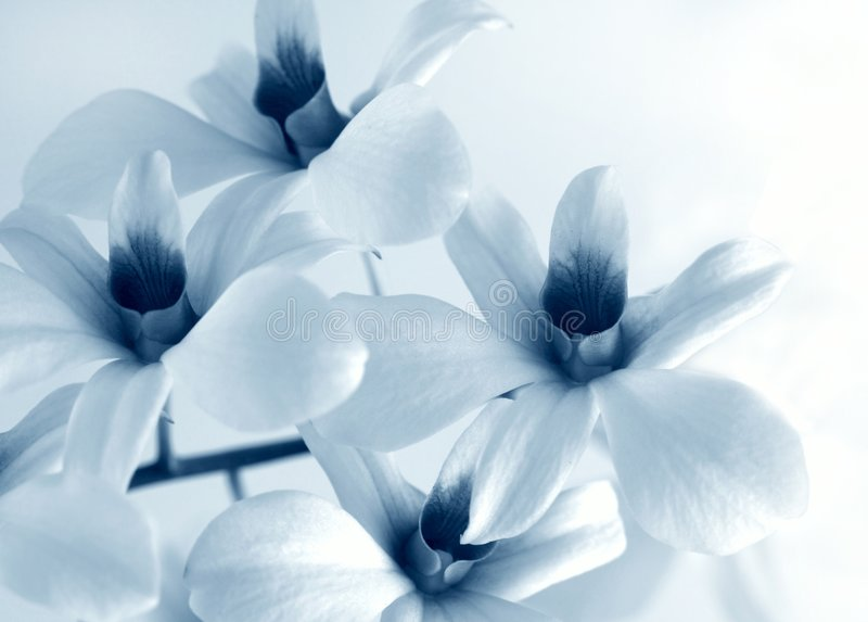 Flower orchid royalty free stock photos