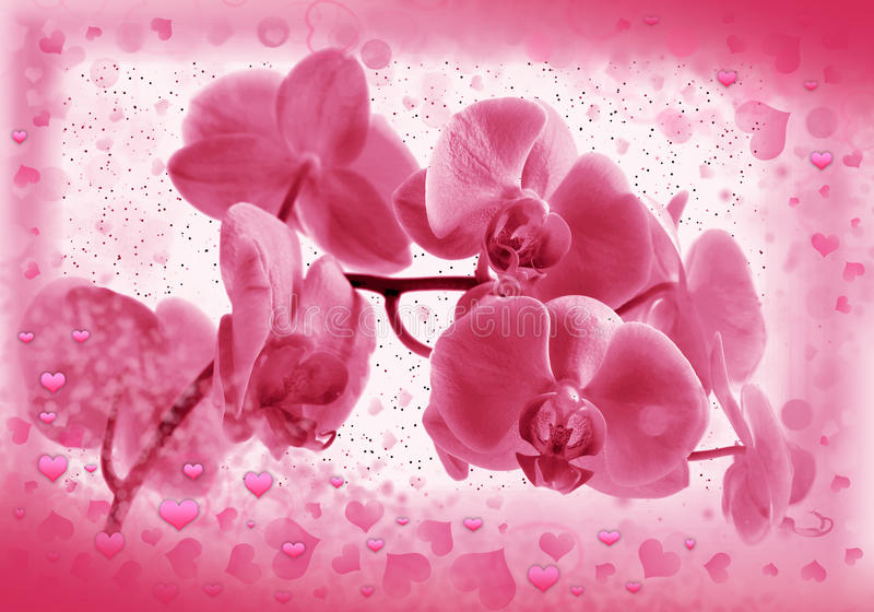 Flower orchid in Valentine's frame stock photo