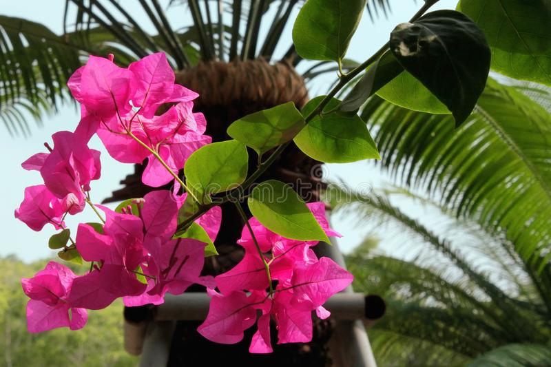 Flower and palm tree stock photos