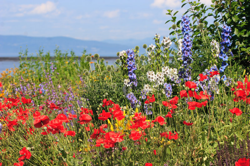 Flower panorama. A colorful garden on the shore of the St-Lawrence river in Quebec, Canada with colorful flowers, red puppies and mountain, sky and water in royalty free stock photos