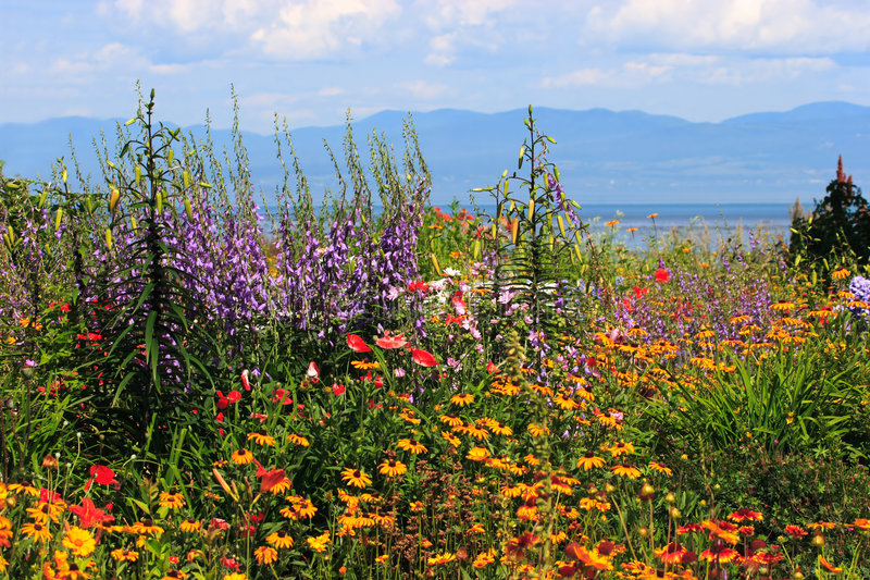 Flower panorama near seaway. A colorful garden on the shore of the St-Lawrence seaway in Quebec, Canada. A wide variety of colorful flowers, mountain, sky and stock photography