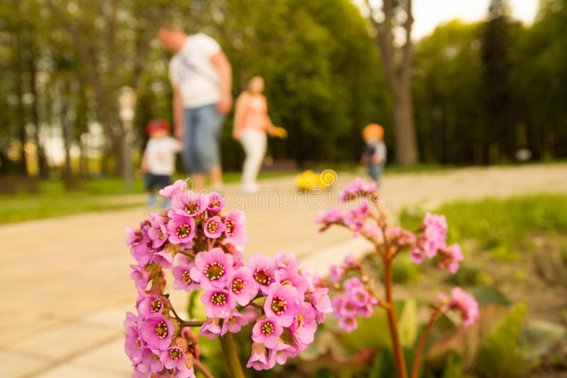 Flower in the park royalty free stock images
