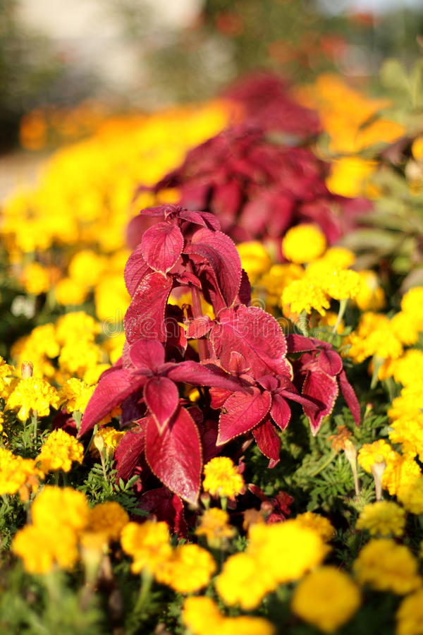Free Flower Patch Royalty Free Stock Photos - 16023488