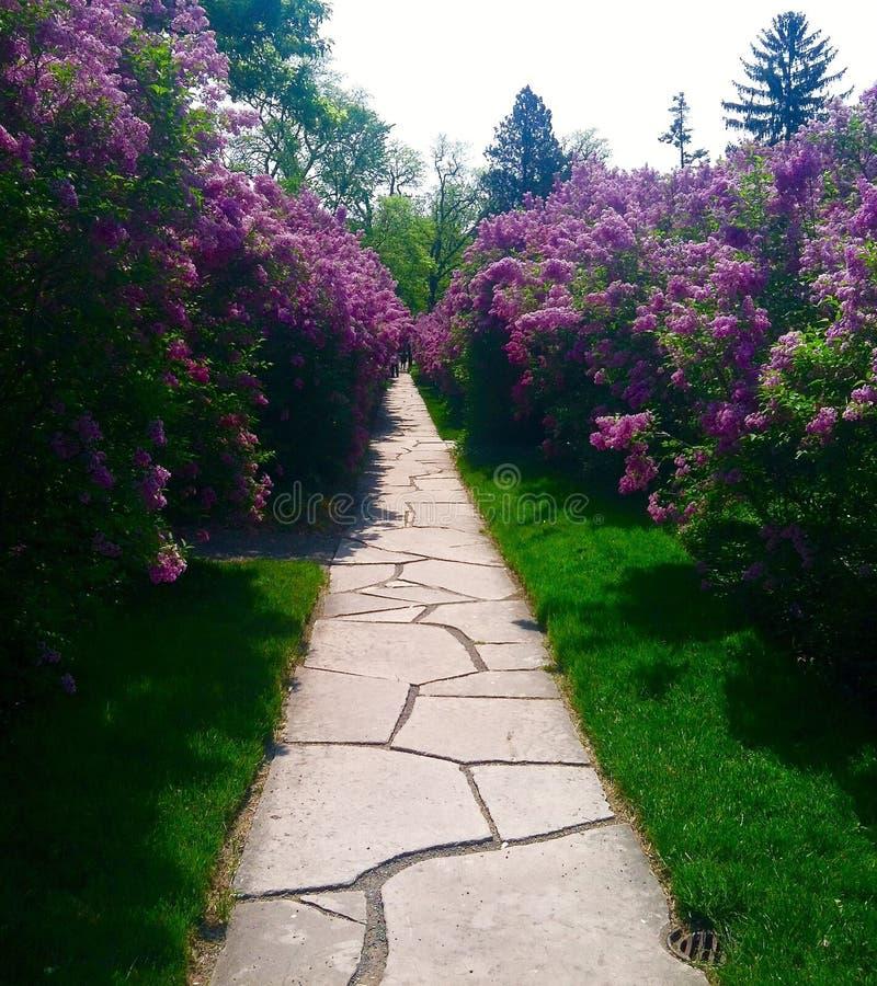 Flower Path stock photo