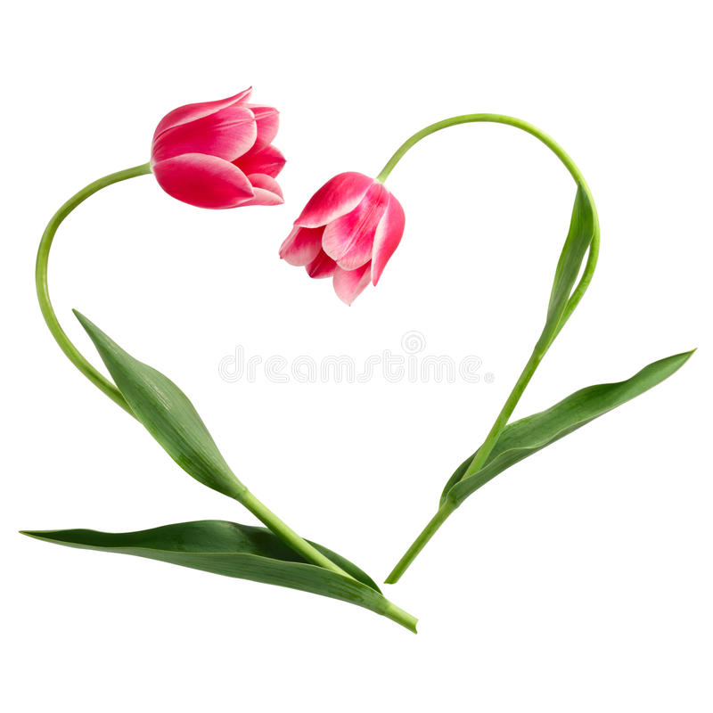 Flower pattern. The form of heart from two tulips stock photo
