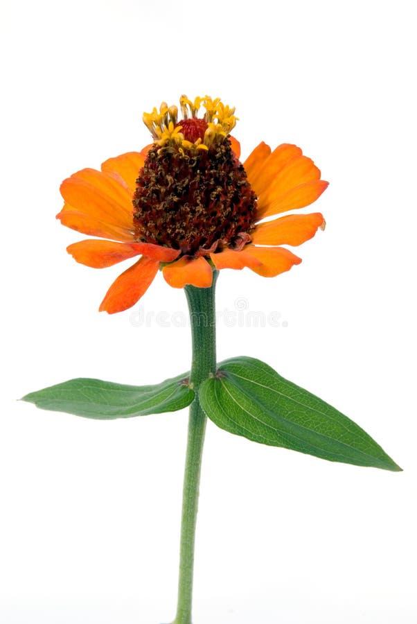 Download Flower pattern stock photo. Image of yellow, season, fine - 3161534