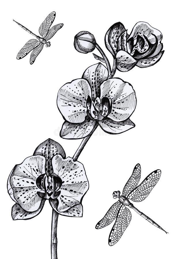 Flower pattern orchid and dragonflies postcard invitation vintage vector illustration
