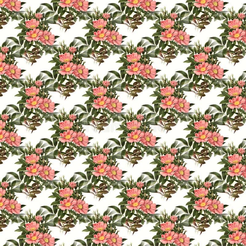 Flower, Pattern, Plant, Leaf Free Public Domain Cc0 Image