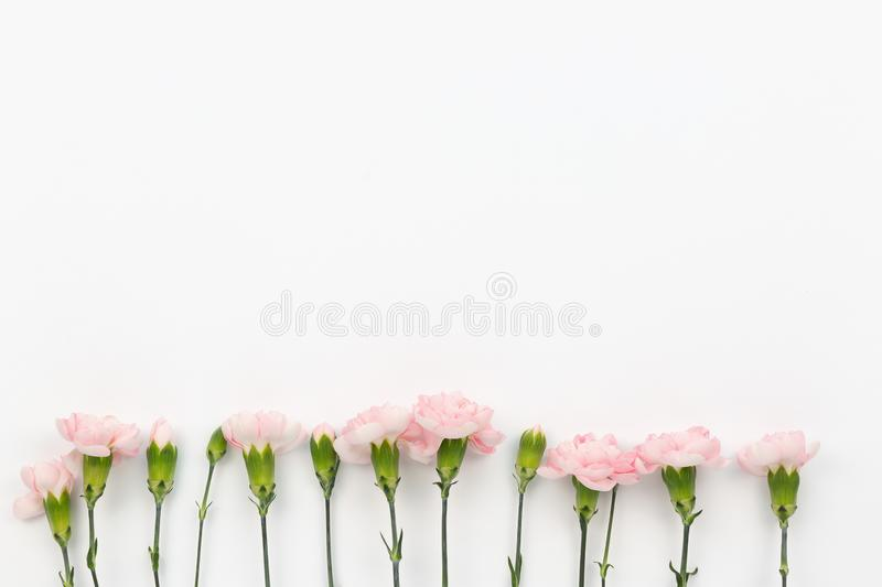 Flower pattern on the white background royalty free stock images