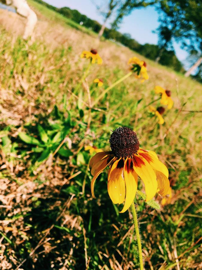 Flower perspective. Yellow flower with awesome perspective stock photography
