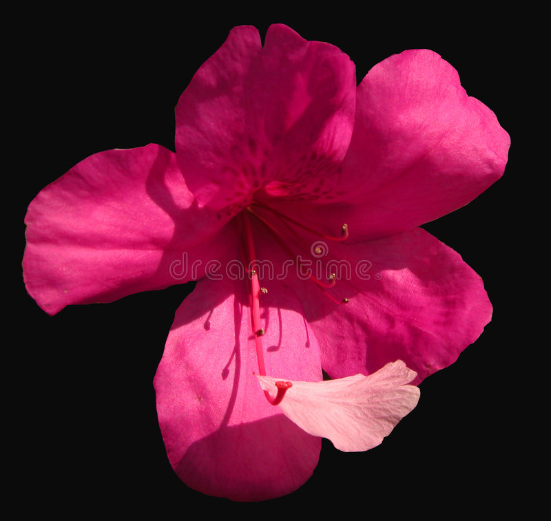 Download Flower and petal stock image. Image of petal, outdoor, image - 16197