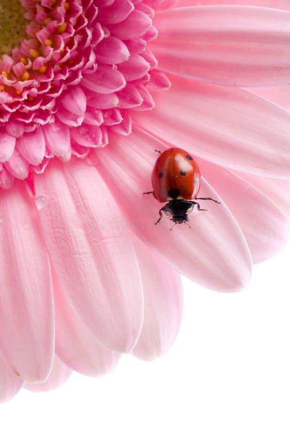 Download Flower petal stock photo. Image of calendula, scarab, botany - 5521708