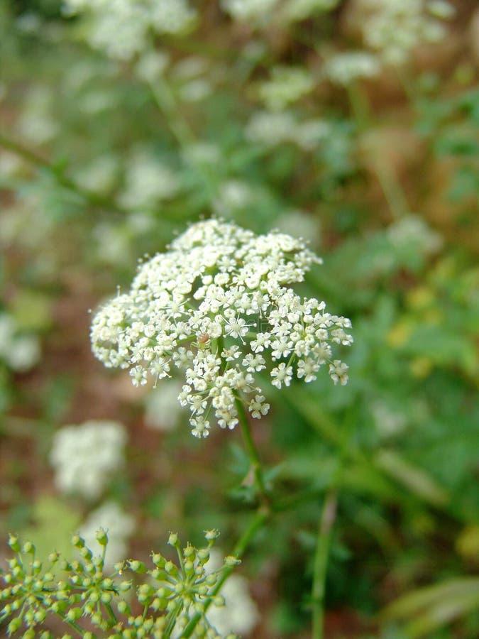 Flower. Petal stock photos