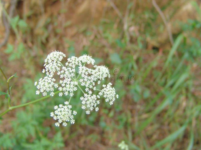 Flower. Petal royalty free stock photos