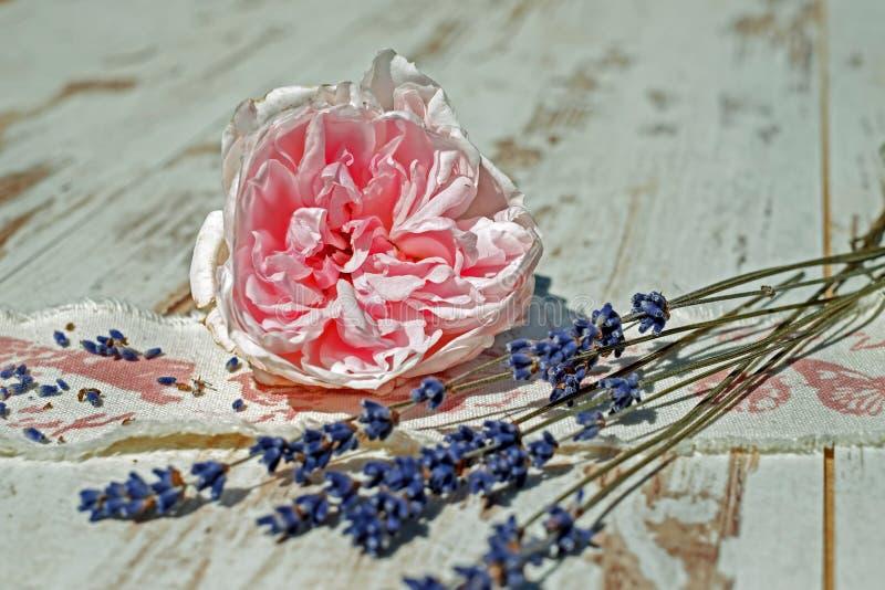 Flower, Petal, Still Life, Cut Flowers stock photos