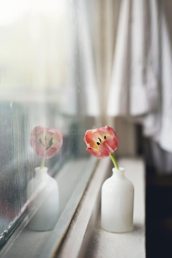 Flower, Petal, Still Life Photography, Floristry royalty free stock photo