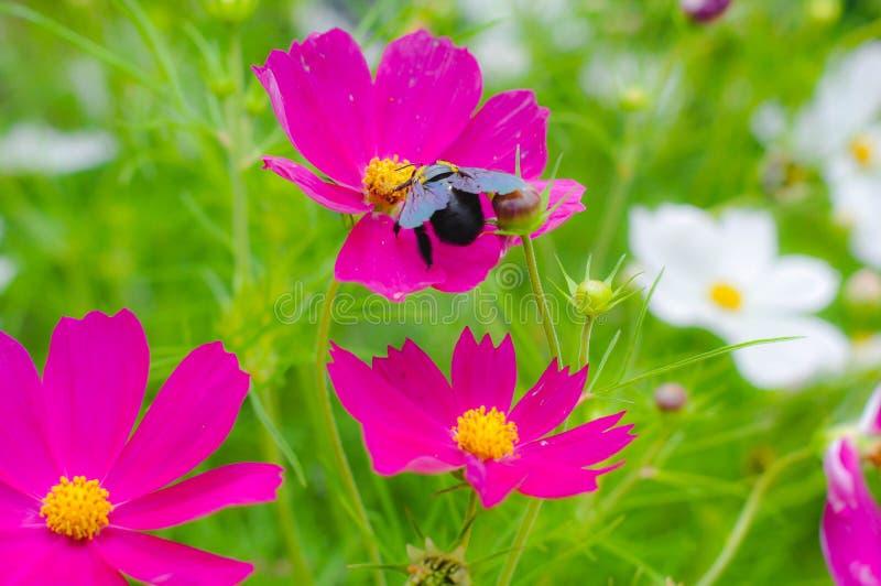 Purple Flower Beautifull royalty free stock photo