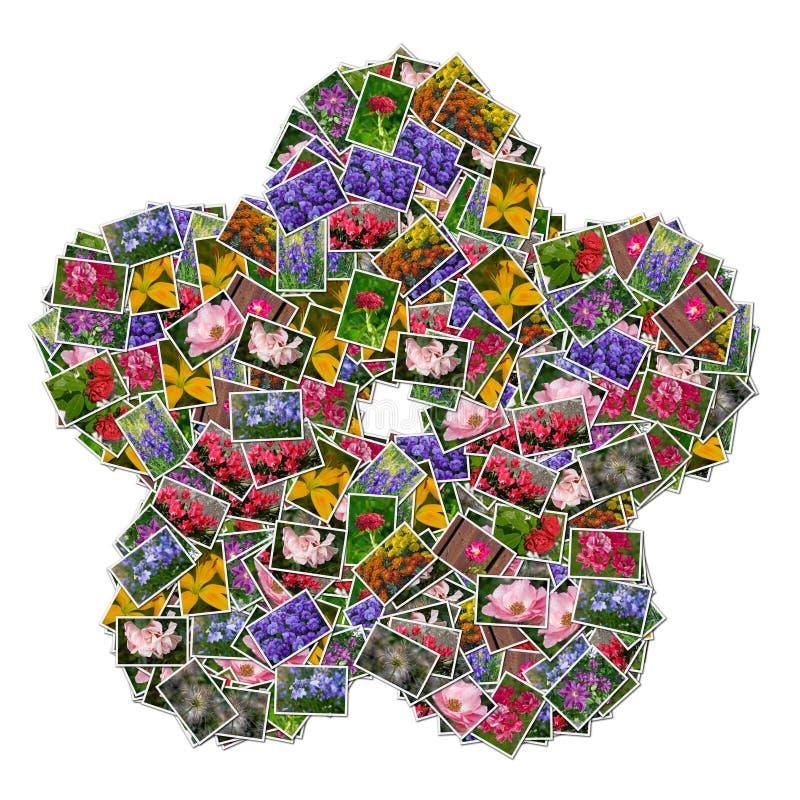 Flower pictures stock illustration