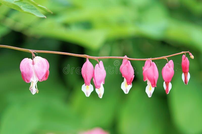 Flower, Pink, Flora, Petal Free Public Domain Cc0 Image