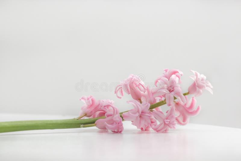 Flower, Pink, Flowering Plant, Cut Flowers Free Public Domain Cc0 Image