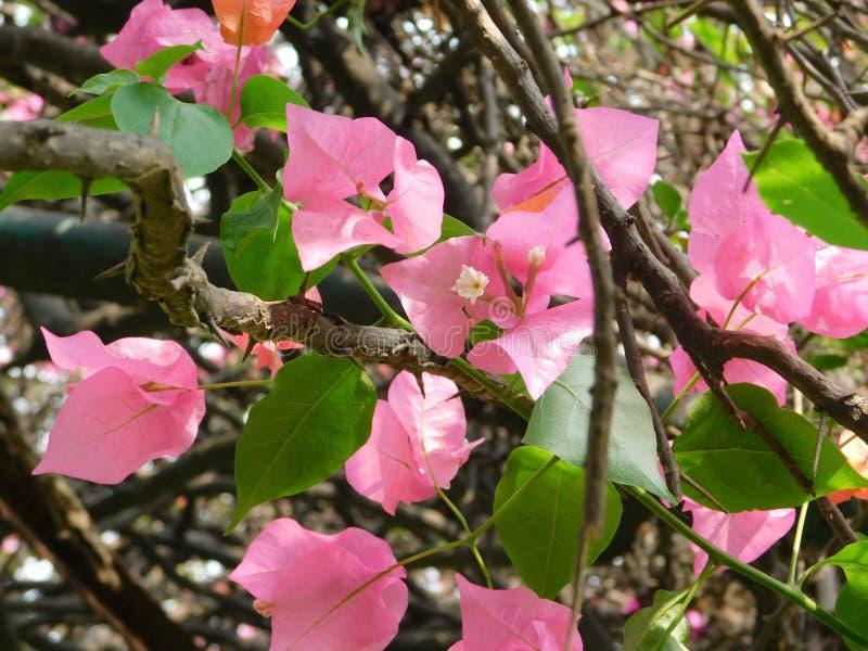 Flower 5 stock image