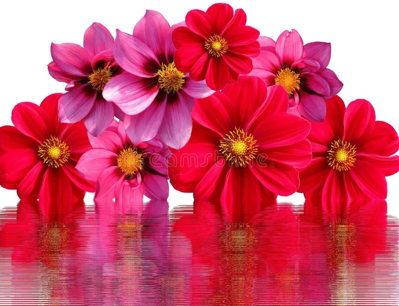 Flower, Pink, Garden Cosmos, Petal Free Public Domain Cc0 Image