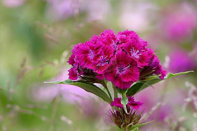 Flower, Pink, Plant, Flora Free Public Domain Cc0 Image