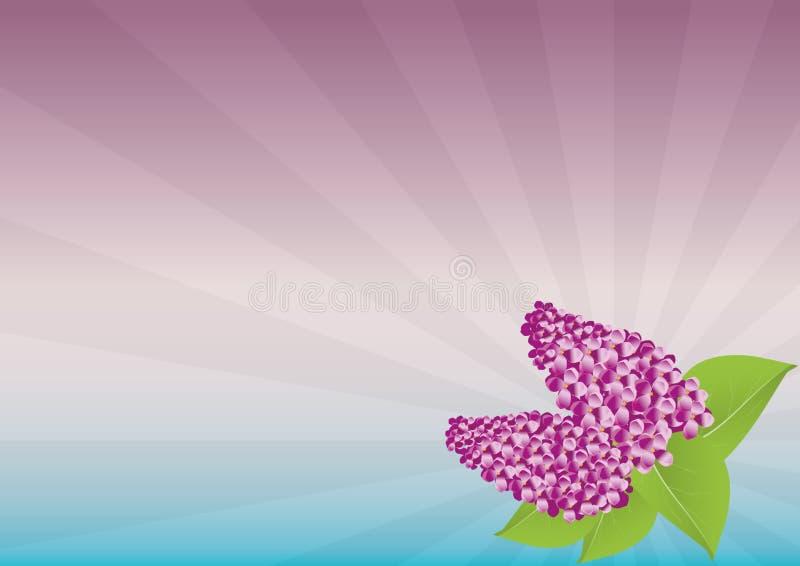 Flower, Pink, Purple, Petal royalty free stock photos