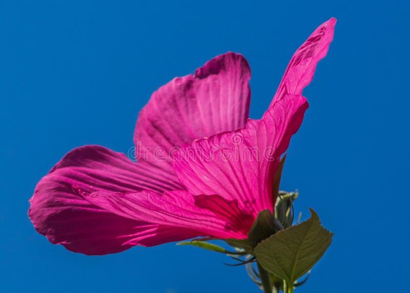 Flower, Pink, Red, Flora Free Public Domain Cc0 Image