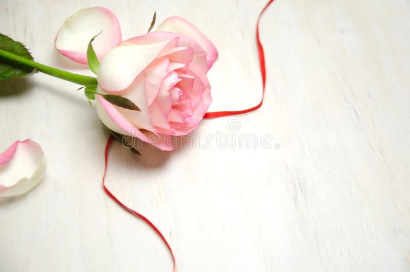 Flower of pink roses on wooden background and the flowers and ribbon stock images