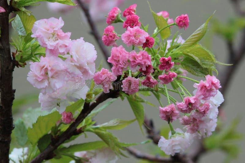 Flower, Plant, Blossom, Spring royalty free stock photos