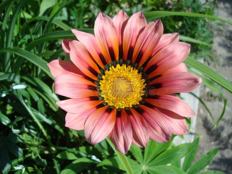 Flower, Plant, Flora, Annual Plant Free Public Domain Cc0 Image