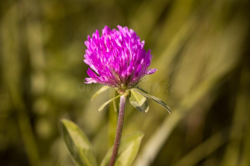 Flower, Plant, Flora, Close Up stock images