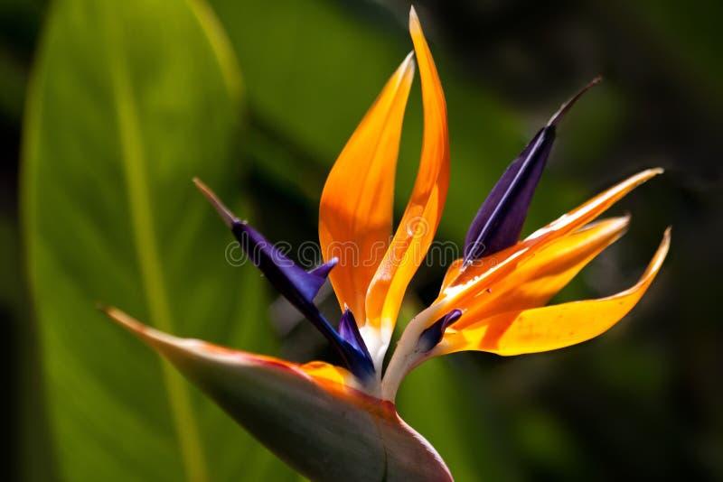 Flower, Plant, Flora, Close Up stock photo