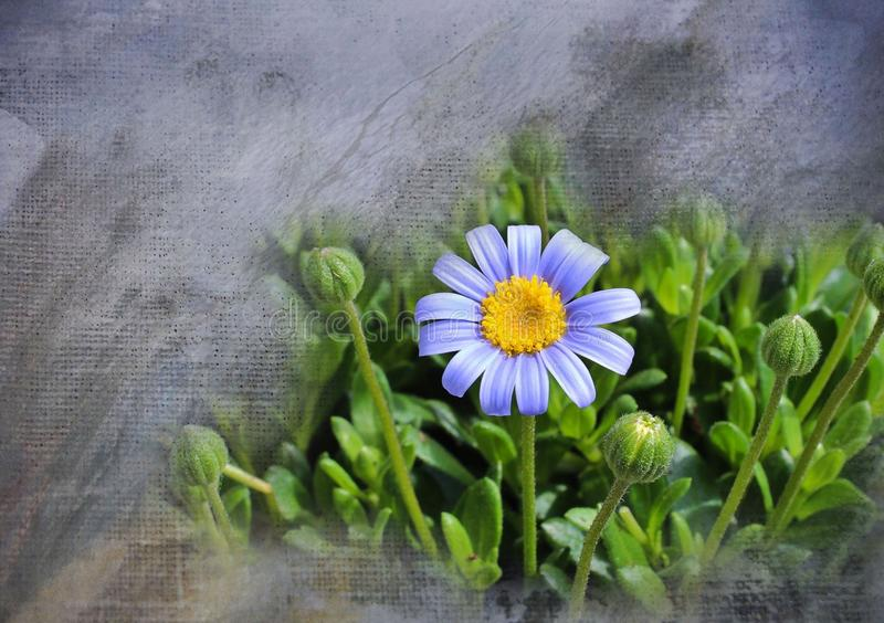 Flower, Plant, Flora, Daisy royalty free stock photography