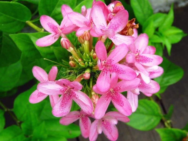 Flower, Plant, Flora, Flowering Plant Free Public Domain Cc0 Image