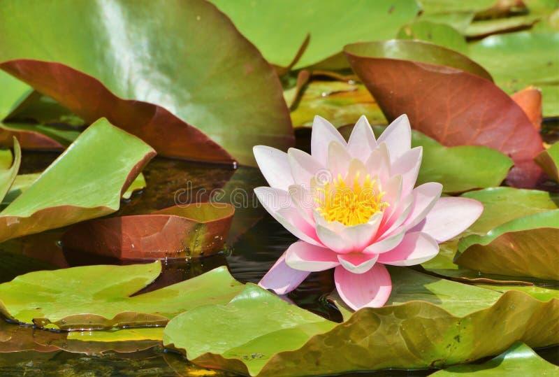 Flower, Plant, Flora, Leaf Free Public Domain Cc0 Image