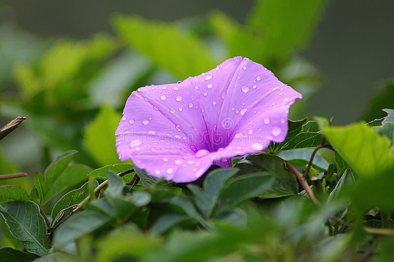 Flower, Plant, Flora, Leaf royalty free stock images
