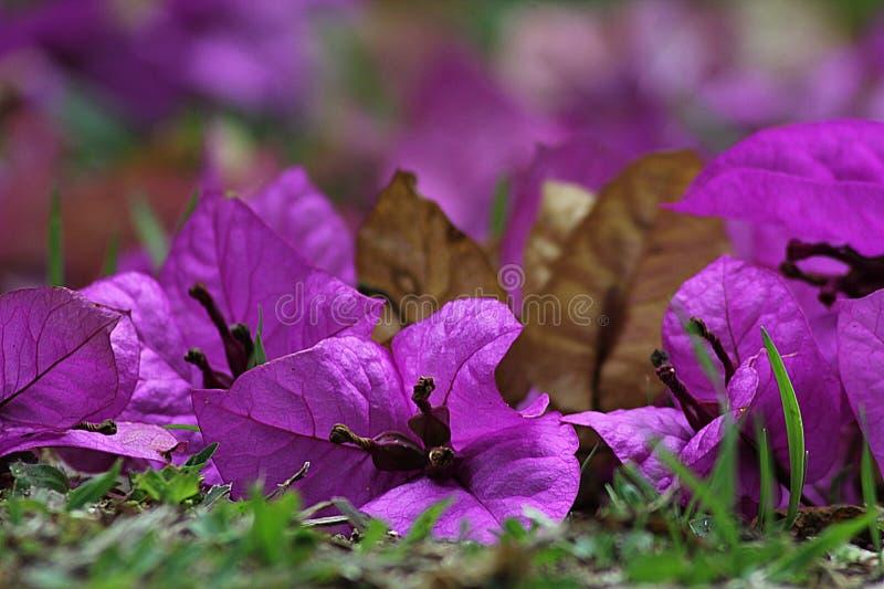Flower, Plant, Flora, Pink stock image