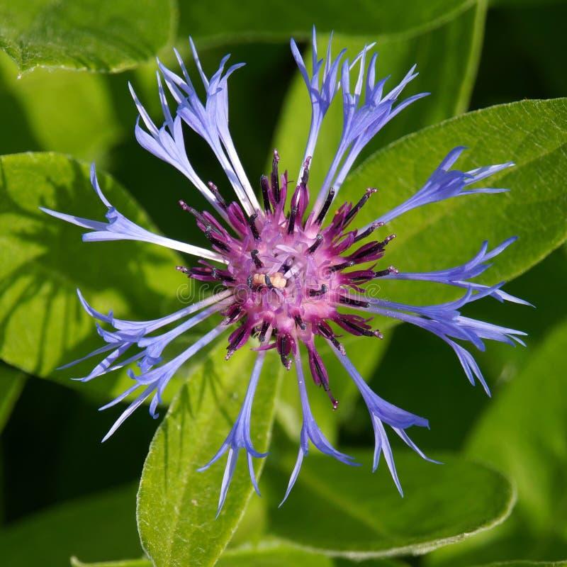 Flower, Plant, Flora, Purple Free Public Domain Cc0 Image