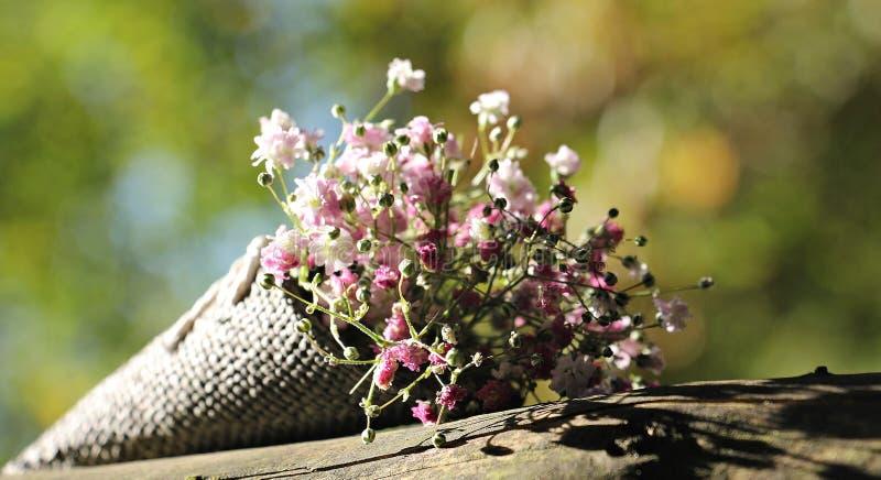 Flower, Plant, Flora, Spring stock photo